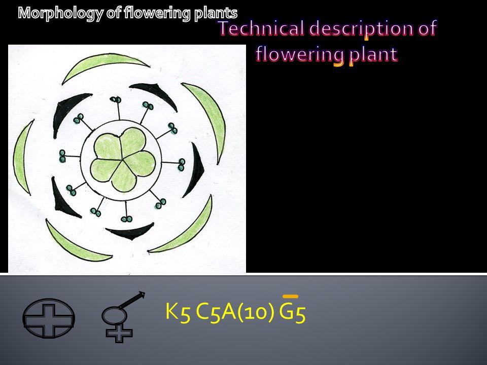 K5 C5A(10) G5