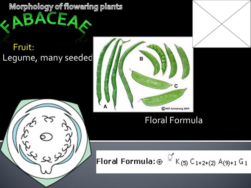 Fruit: Legume, many seeded Floral Formula