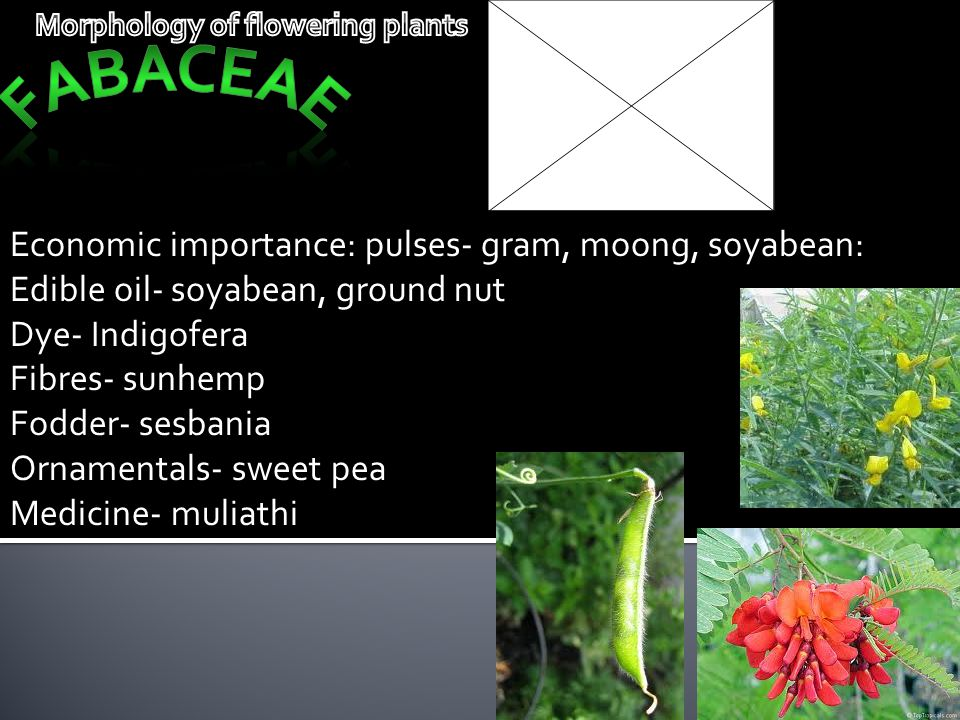 Economic importance: pulses- gram, moong, soyabean: Edible oil- soyabean, ground nut Dye- Indigofera Fibres- sunhemp Fodder- sesbania Ornamentals- swe