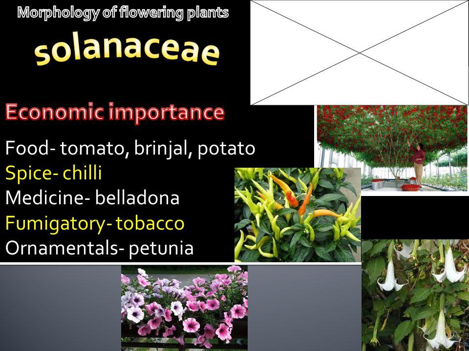 Food- tomato, brinjal, potato Spice- chilli Medicine- belladona Fumigatory- tobacco Ornamentals- petunia