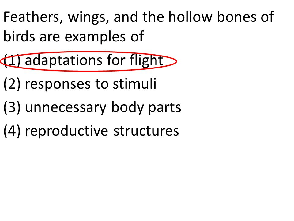 Feathers, wings, and the hollow bones of birds are examples of (1) adaptations for flight (2) responses to stimuli (3) unnecessary body parts (4) repr