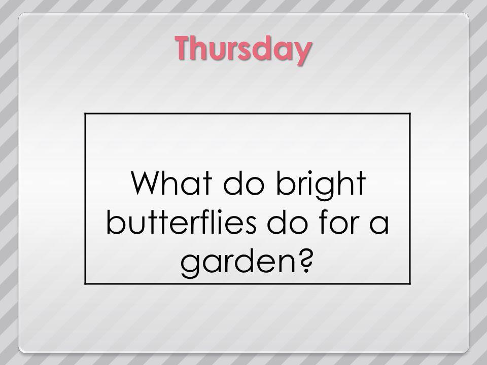 Thursday What do bright butterflies do for a garden?
