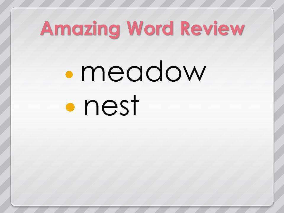 Amazing Word Review meadow nest