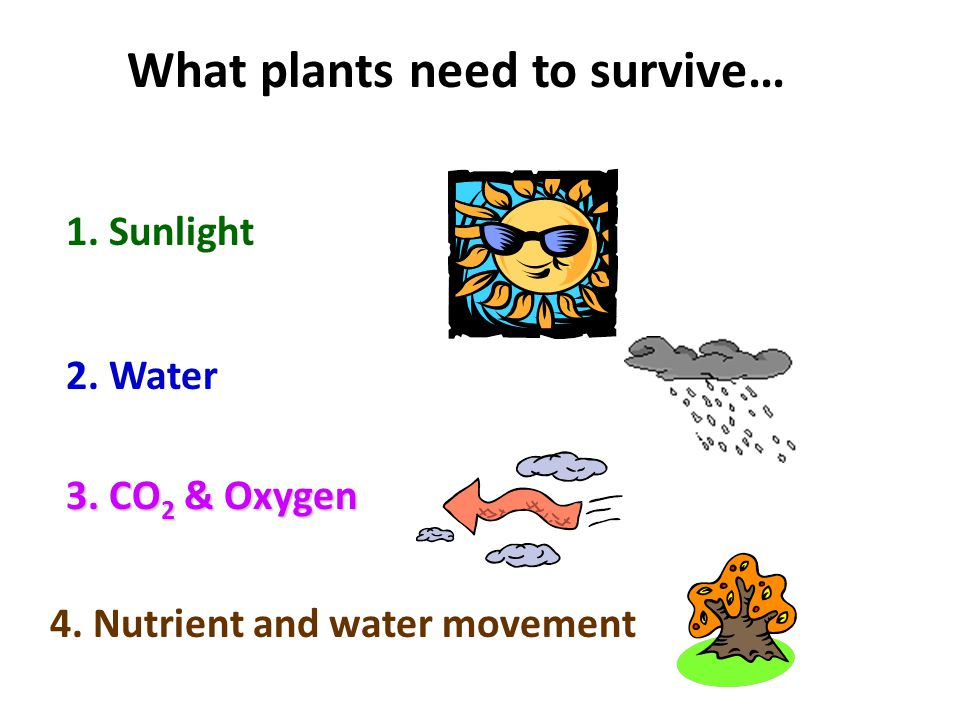 What plants need to survive… 1. Sunlight 2. Water 3. CO 2 & Oxygen 4. Nutrient and water movement