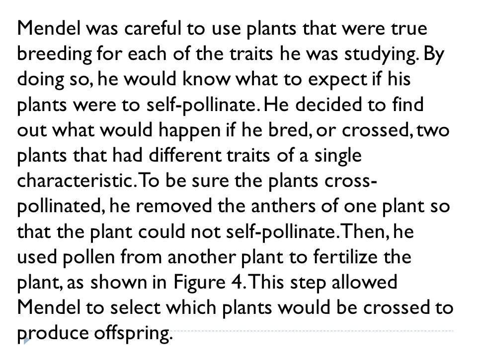 Mendel was careful to use plants that were true breeding for each of the traits he was studying. By doing so, he would know what to expect if his plan