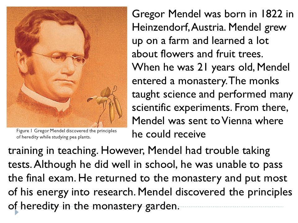 Gregor Mendel was born in 1822 in Heinzendorf, Austria. Mendel grew up on a farm and learned a lot about flowers and fruit trees. When he was 21 years