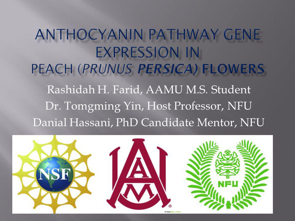 Research Topic Importance of Peach Flower Anthocyanin Pathway Literature Review Research Purpose Identified Problems Methods Results & Discussion Personal Goal: CTAB Protocol Methods Results China Experience Thank You