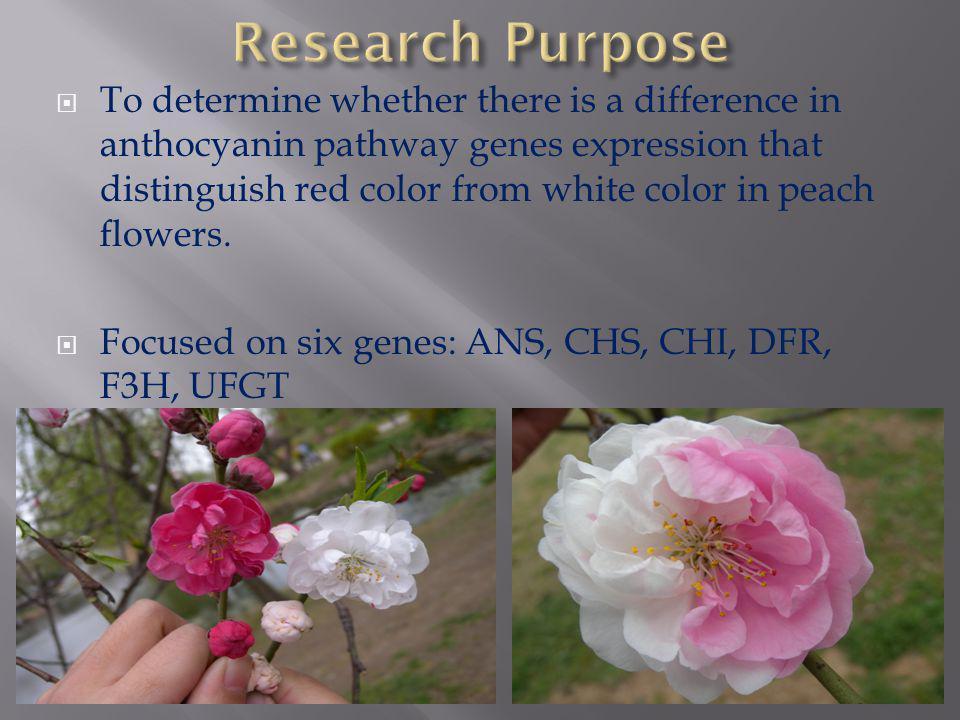 National Science Foundation Alabama A&M University/CREST Nanjing Forestry University Dr.