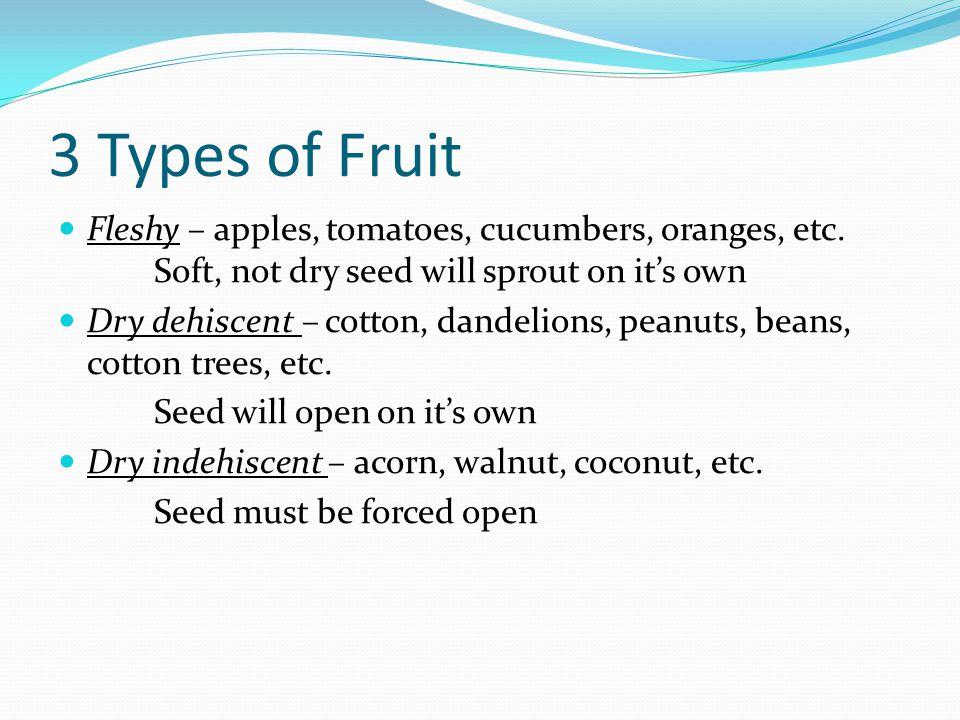 3 Types of Fruit Fleshy – apples, tomatoes, cucumbers, oranges, etc.