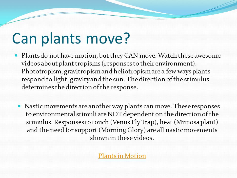 Can plants move.Plants do not have motion, but they CAN move.