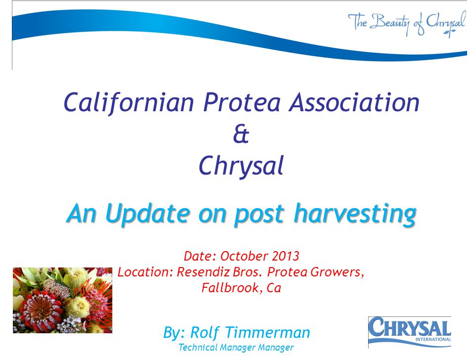 By: Rolf Timmerman Technical Manager Manager Californian Protea Association & Chrysal An Update on post harvesting Date: October 2013 Location: Resend
