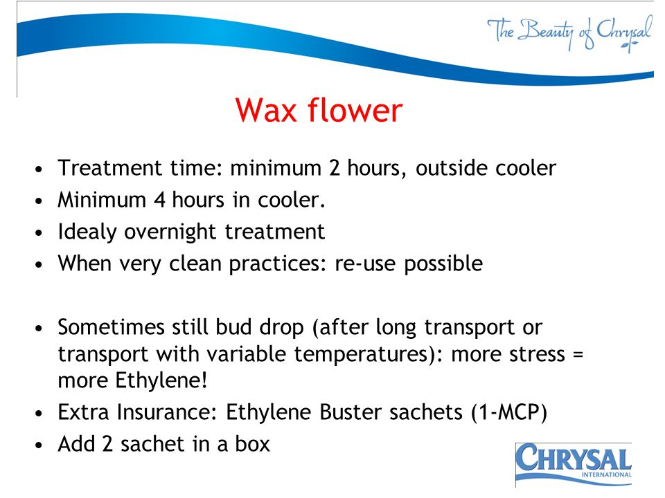 Wax flower Treatment time: minimum 2 hours, outside cooler Minimum 4 hours in cooler. Idealy overnight treatment When very clean practices: re-use pos