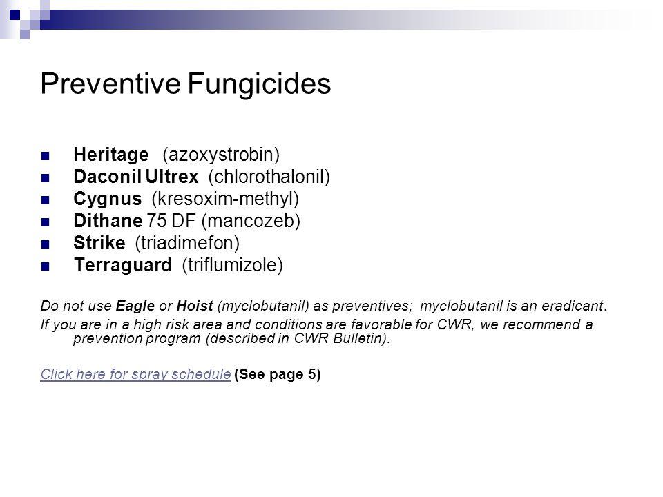 Preventive Fungicides Heritage (azoxystrobin) Daconil Ultrex (chlorothalonil) Cygnus (kresoxim-methyl) Dithane 75 DF (mancozeb) Strike (triadimefon) Terraguard (triflumizole) Do not use Eagle or Hoist (myclobutanil) as preventives; myclobutanil is an eradicant.