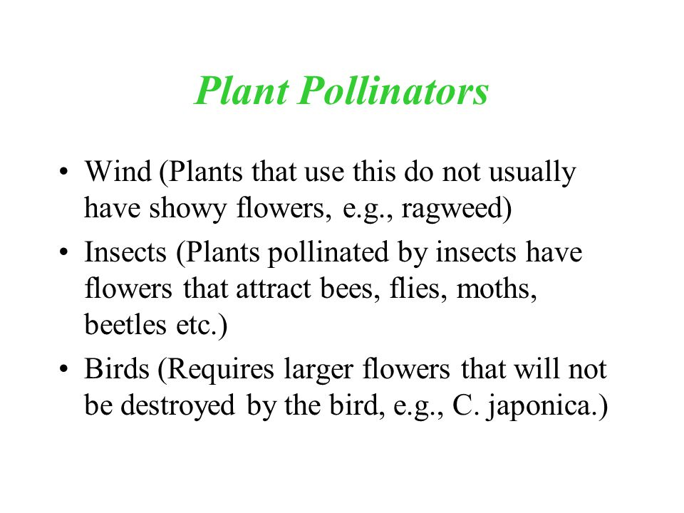 Plant Pollinators Wind (Plants that use this do not usually have showy flowers, e.g., ragweed) Insects (Plants pollinated by insects have flowers that