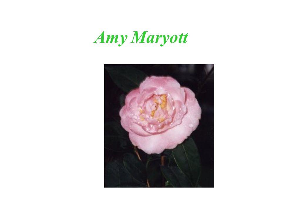 Amy Maryott