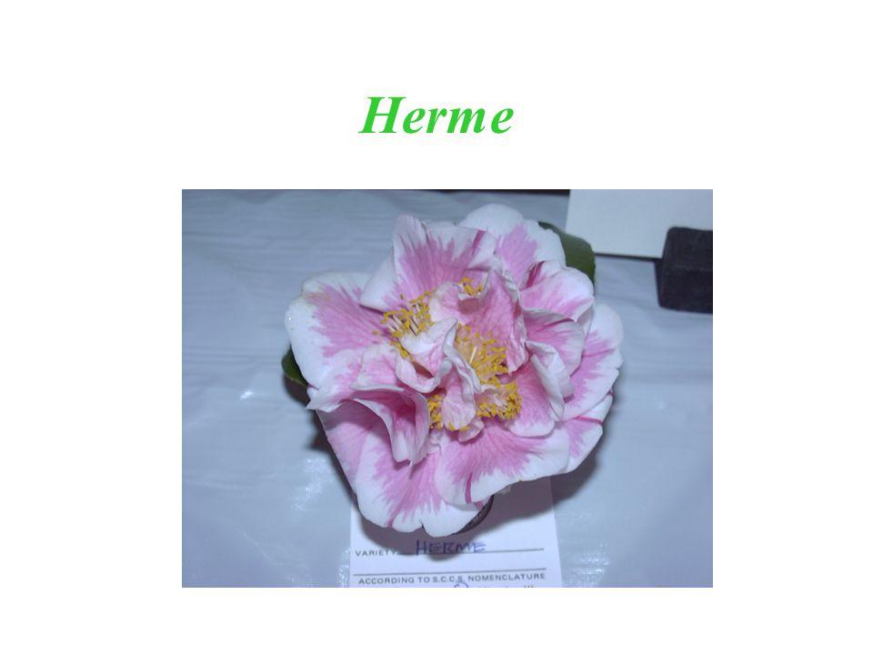Herme