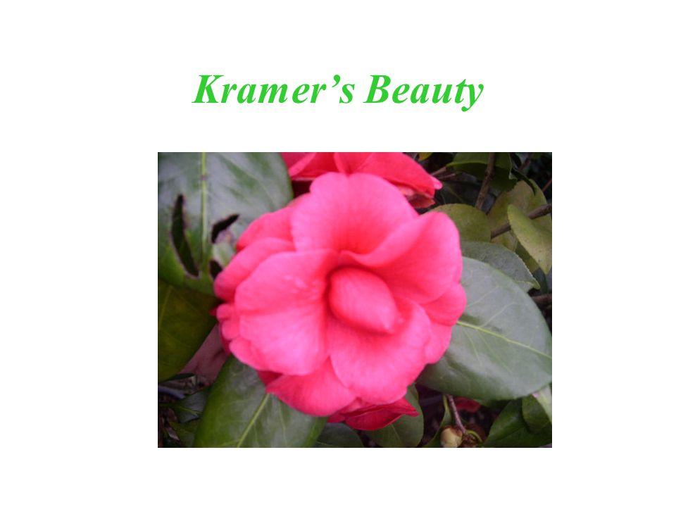 Kramers Beauty