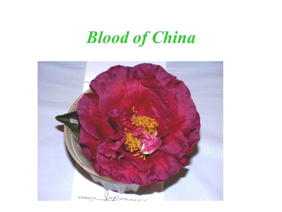 Blood of China
