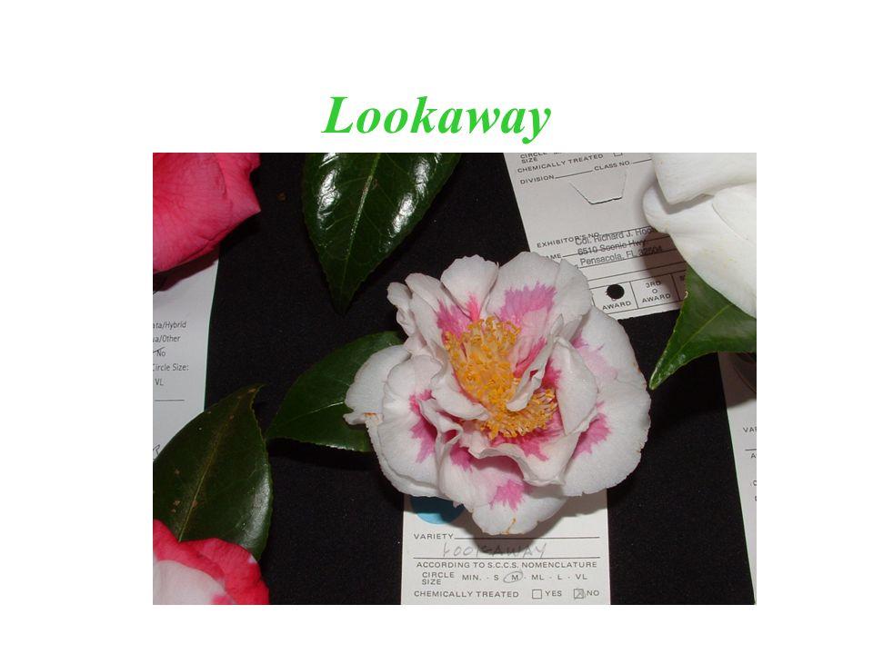Lookaway