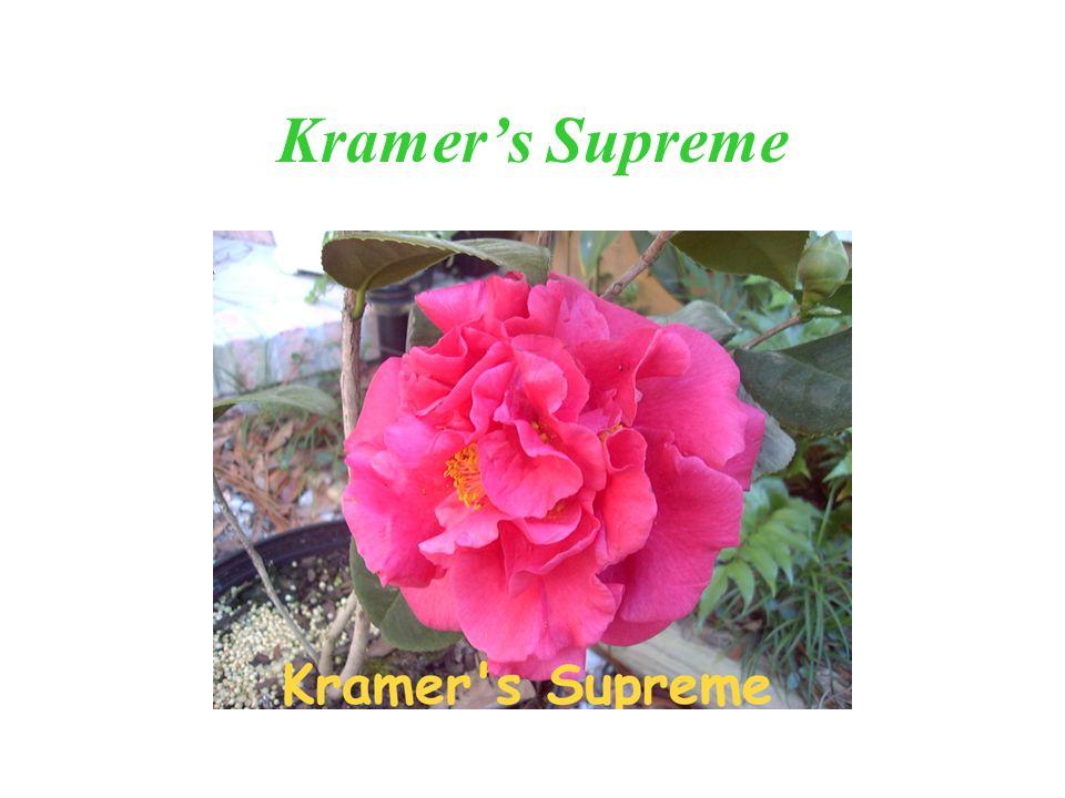 Kramers Supreme