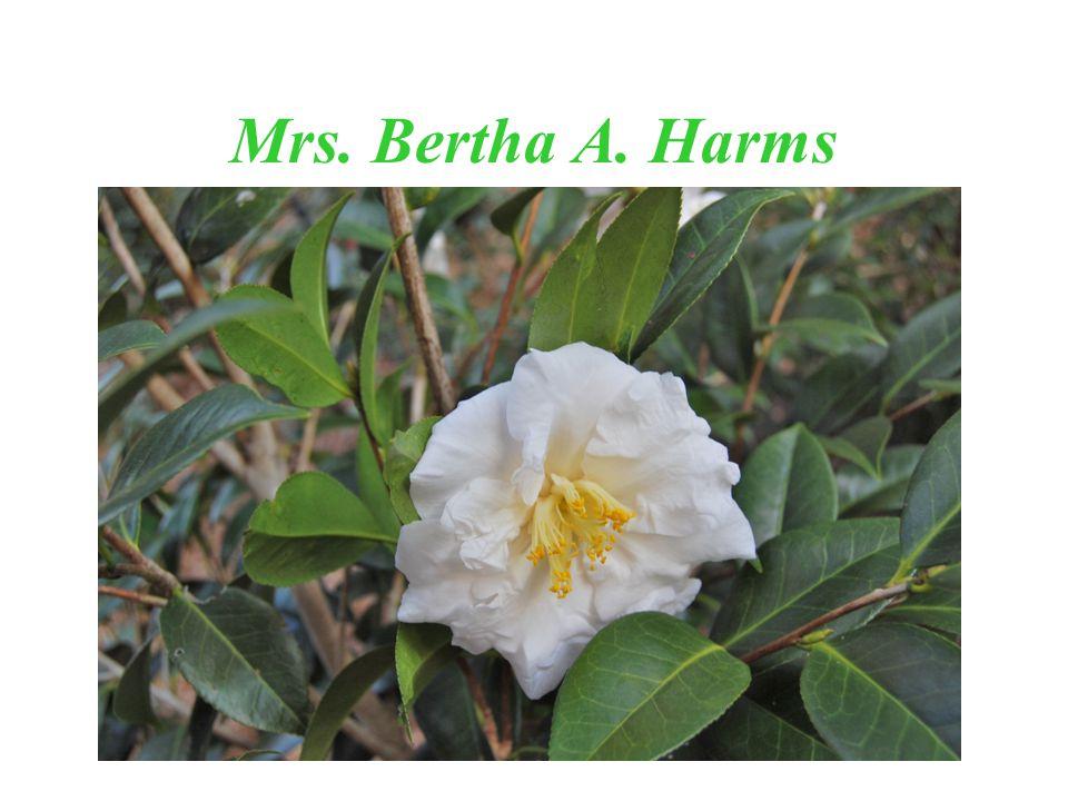 Mrs. Bertha A. Harms