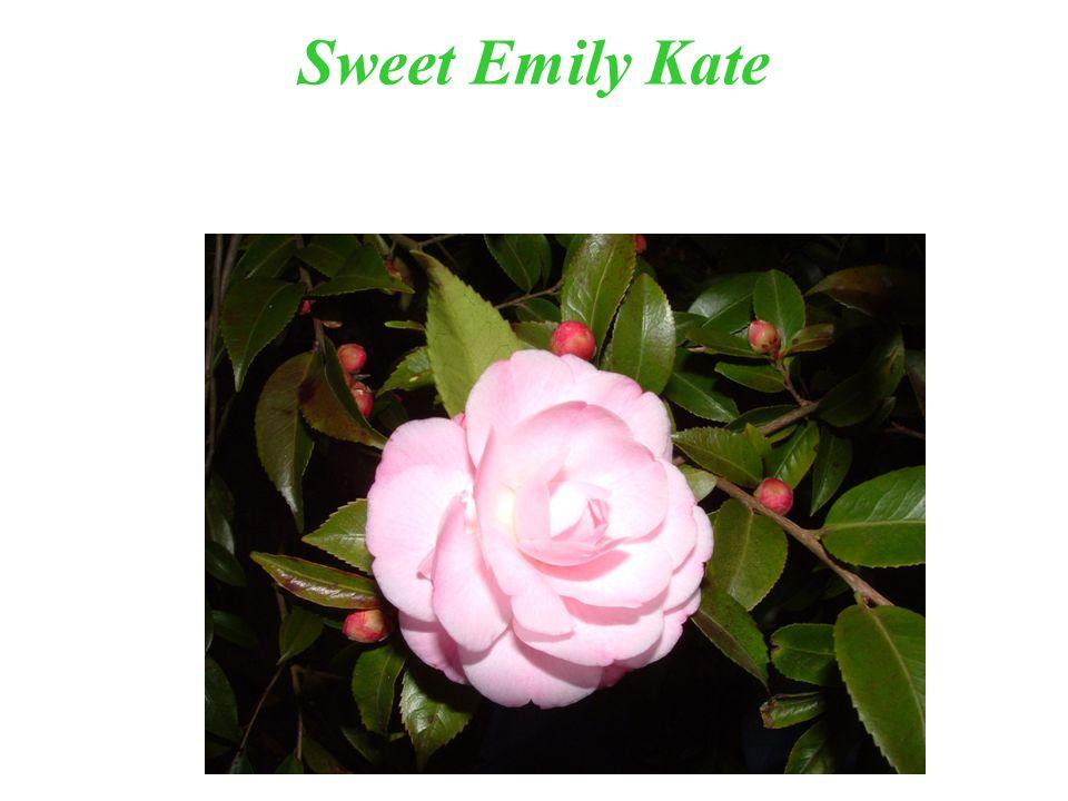 Sweet Emily Kate