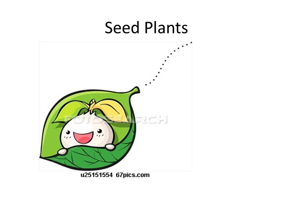 Seed plants are divided into two groups: 1.