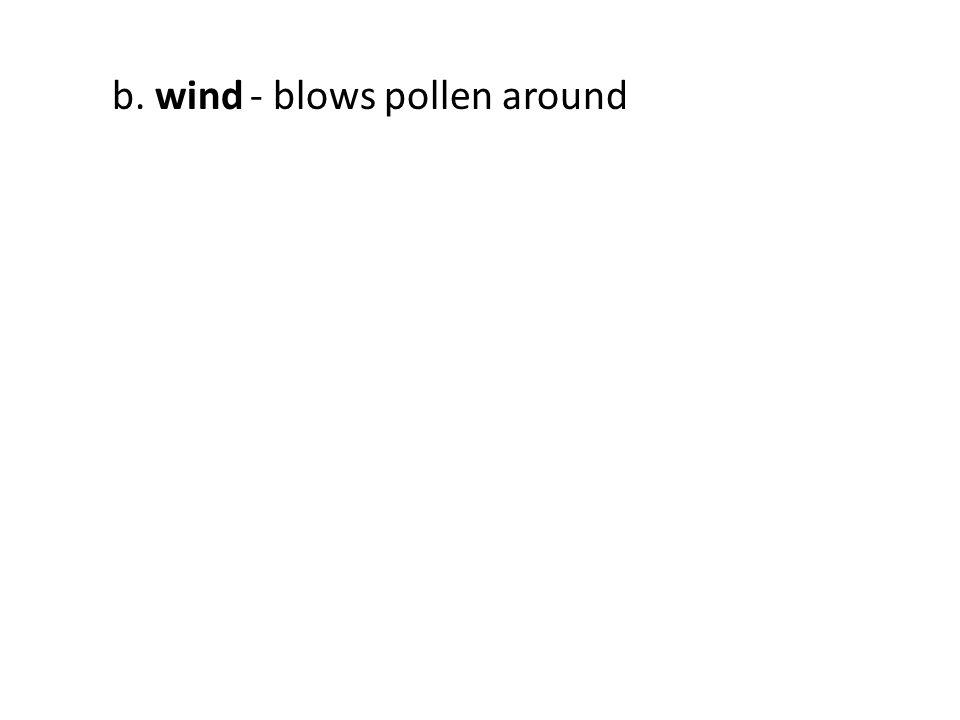 b. wind- blows pollen around