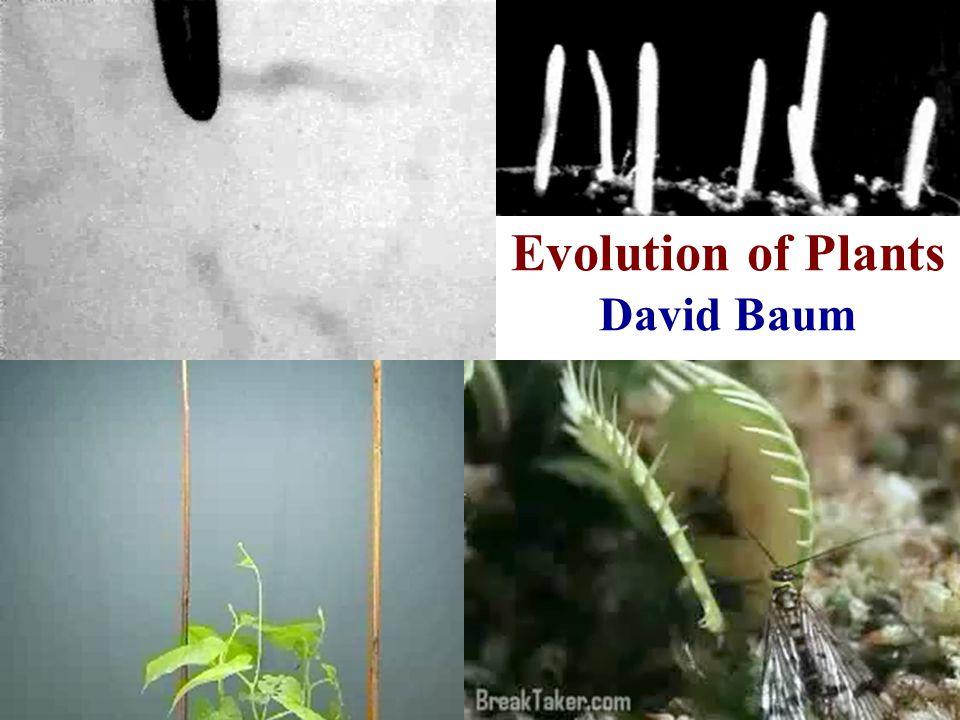 Evolution of Plants David Baum