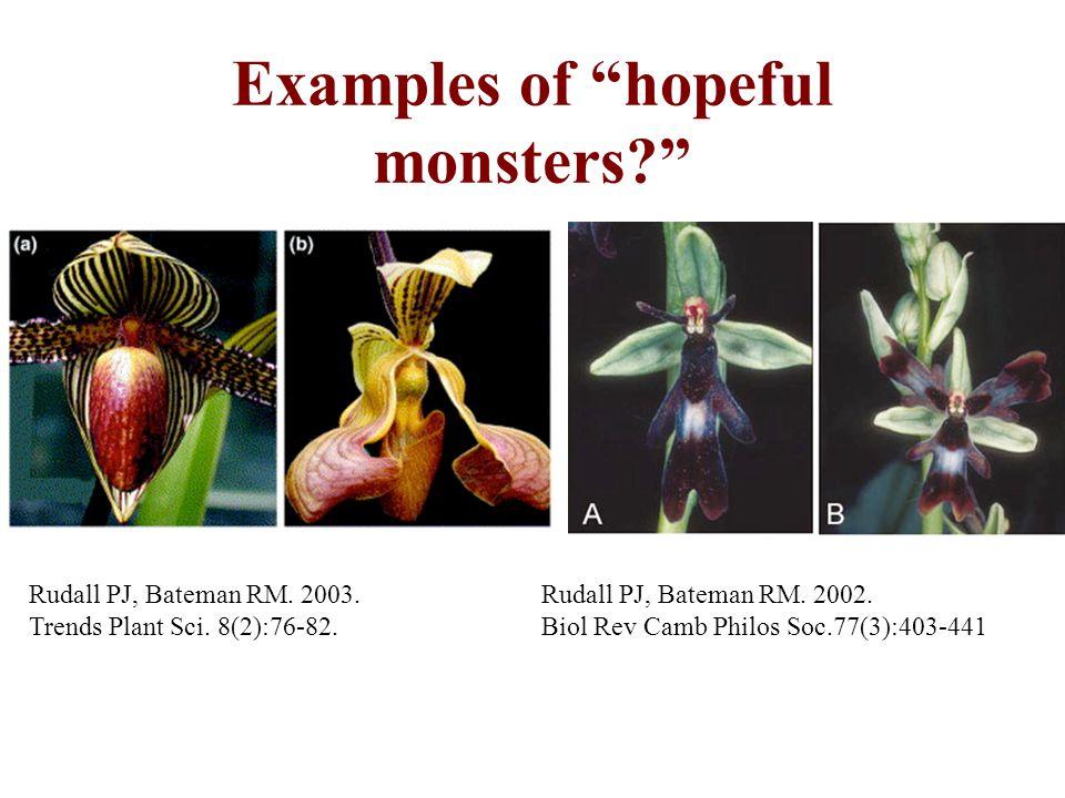 Examples of hopeful monsters? Rudall PJ, Bateman RM. 2003. Trends Plant Sci. 8(2):76-82. Rudall PJ, Bateman RM. 2002. Biol Rev Camb Philos Soc.77(3):4