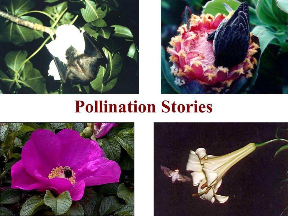 Pollination Stories