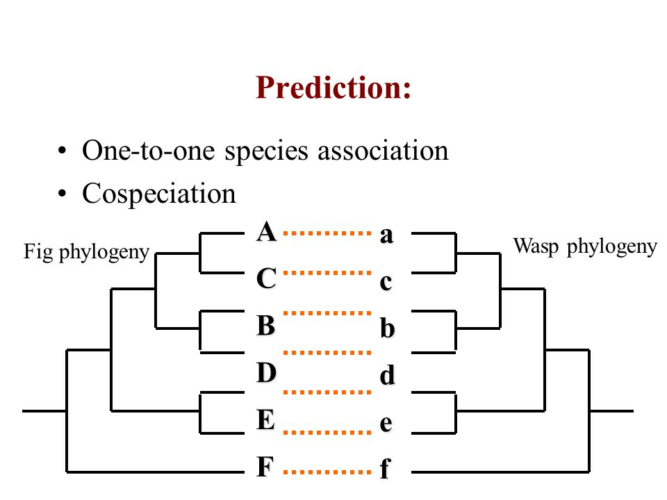 Prediction: One-to-one species association Cospeciation A B C D E F a b c d e f Fig phylogeny Wasp phylogeny