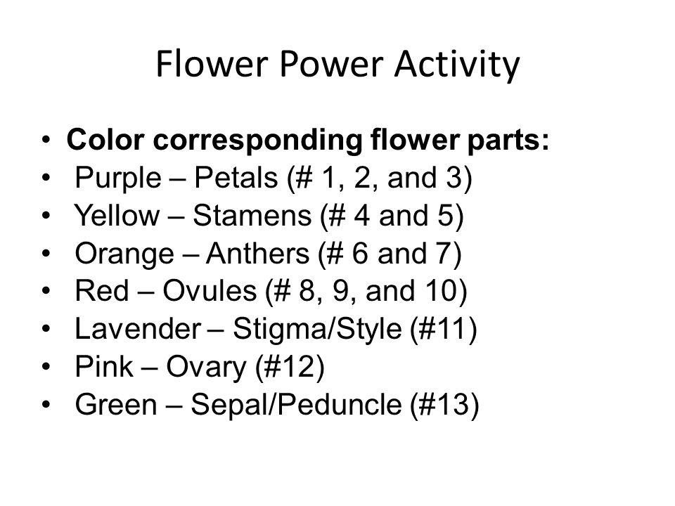 Flower Power Activity Color corresponding flower parts: Purple – Petals (# 1, 2, and 3) Yellow – Stamens (# 4 and 5) Orange – Anthers (# 6 and 7) Red – Ovules (# 8, 9, and 10) Lavender – Stigma/Style (#11) Pink – Ovary (#12) Green – Sepal/Peduncle (#13)