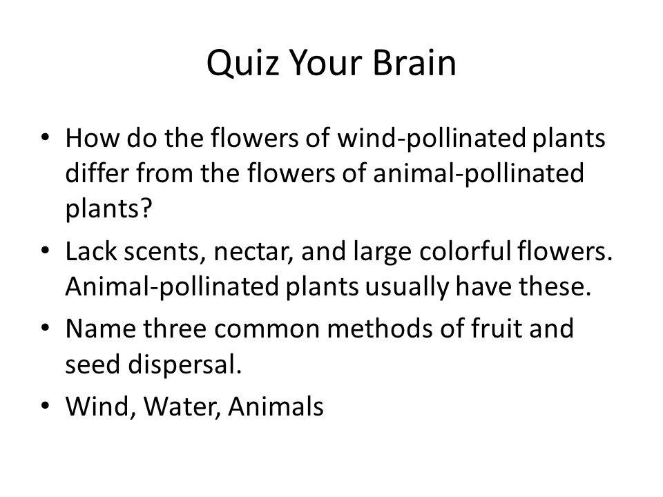 Quiz Your Brain How do the flowers of wind-pollinated plants differ from the flowers of animal-pollinated plants.