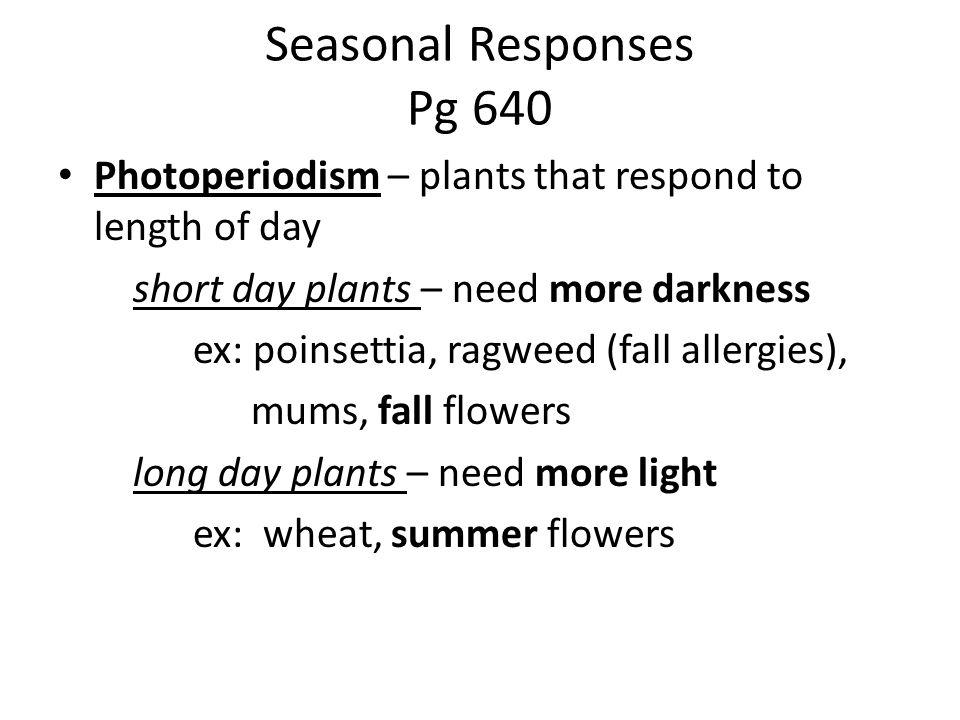 Seasonal Responses Pg 640 Photoperiodism – plants that respond to length of day short day plants – need more darkness ex: poinsettia, ragweed (fall allergies), mums, fall flowers long day plants – need more light ex: wheat, summer flowers