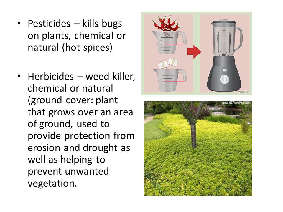 Pesticides – kills bugs on plants, chemical or natural (hot spices) Herbicides – weed killer, chemical or natural (ground cover: plant that grows over an area of ground, used to provide protection from erosion and drought as well as helping to prevent unwanted vegetation.