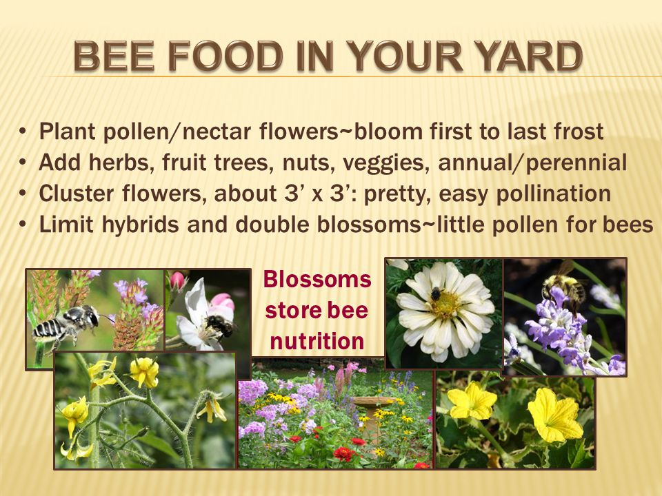 Plant pollen/nectar flowers~bloom first to last frost Add herbs, fruit trees, nuts, veggies, annual/perennial Cluster flowers, about 3 x 3: pretty, easy pollination Limit hybrids and double blossoms~little pollen for bees Blossoms store bee nutrition