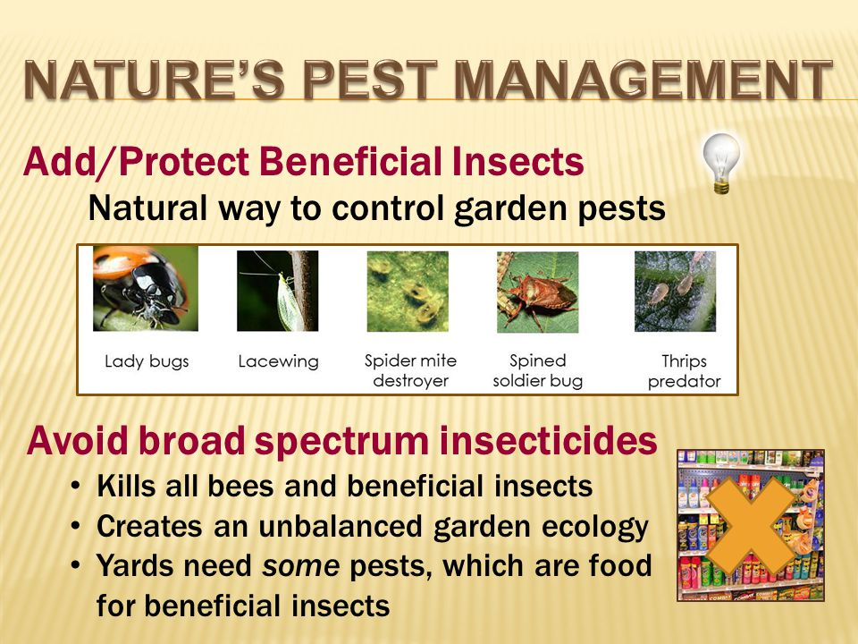 Avoid broad spectrum insecticides Kills all bees and beneficial insects Creates an unbalanced garden ecology Yards need some pests, which are food for beneficial insects Natural way to control garden pests Add/Protect Beneficial Insects