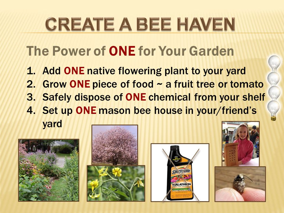 The Power of ONE for Your Garden 1.Add ONE native flowering plant to your yard 2.Grow ONE piece of food ~ a fruit tree or tomato 3.Safely dispose of ONE chemical from your shelf 4.Set up ONE mason bee house in your/friends yard