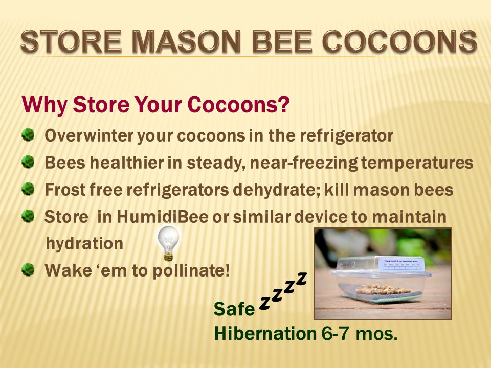 Why Store Your Cocoons.