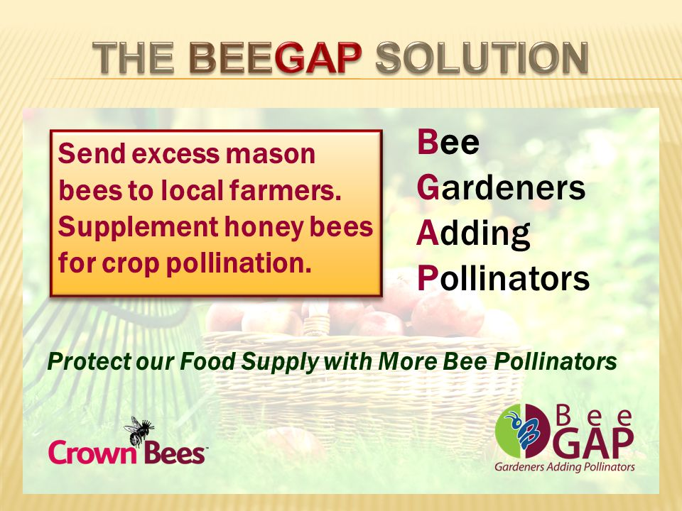 Send excess mason bees to local farmers. Supplement honey bees for crop pollination.