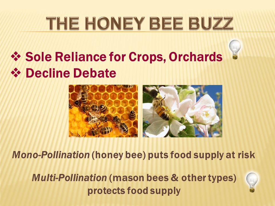 Sole Reliance for Crops, Orchards Decline Debate Mono-Pollination (honey bee) puts food supply at risk Multi-Pollination (mason bees & other types) protects food supply
