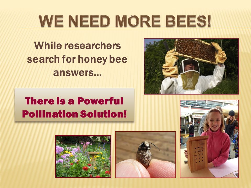 While researchers search for honey bee answers… There is a Powerful Pollination Solution!