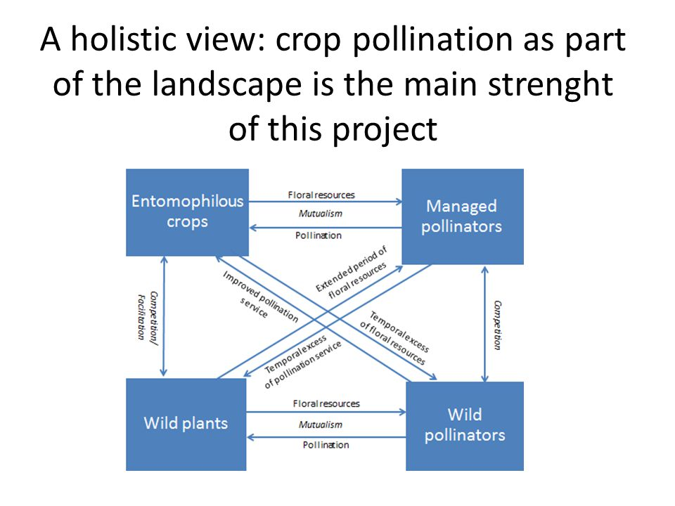 A holistic view: crop pollination as part of the landscape is the main strenght of this project