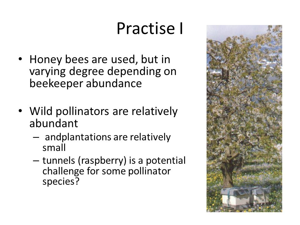 Practise I Honey bees are used, but in varying degree depending on beekeeper abundance Wild pollinators are relatively abundant – andplantations are relatively small – tunnels (raspberry) is a potential challenge for some pollinator species