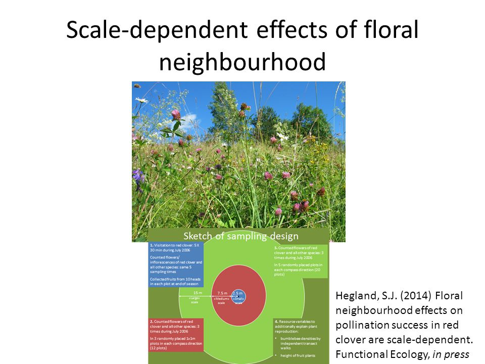 Scale-dependent effects of floral neighbourhood Hegland, S.J.