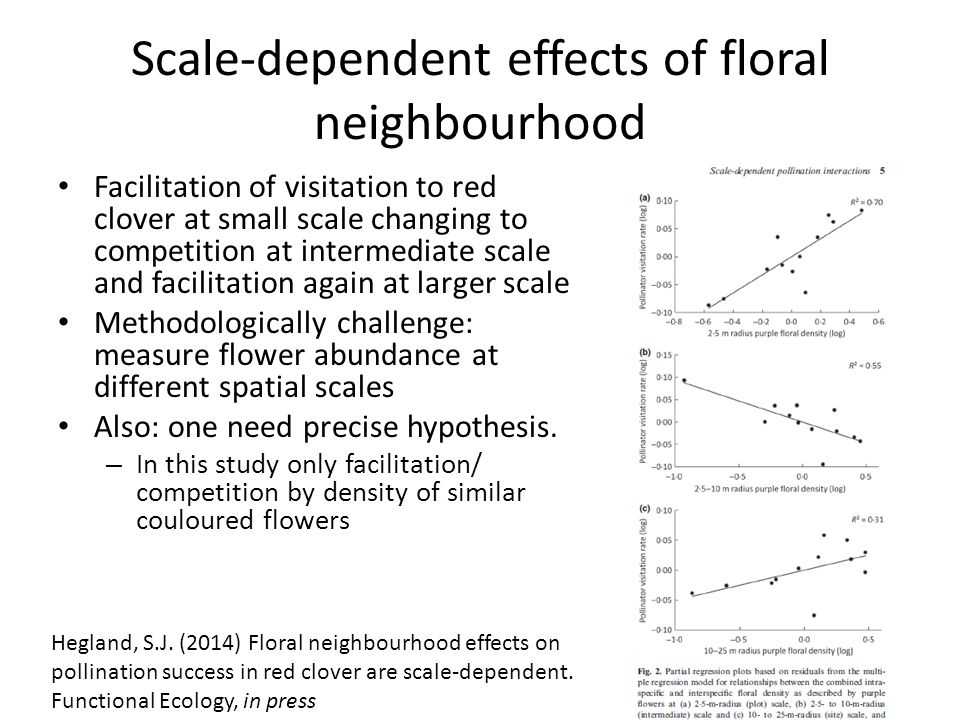 Scale-dependent effects of floral neighbourhood Facilitation of visitation to red clover at small scale changing to competition at intermediate scale and facilitation again at larger scale Methodologically challenge: measure flower abundance at different spatial scales Also: one need precise hypothesis.