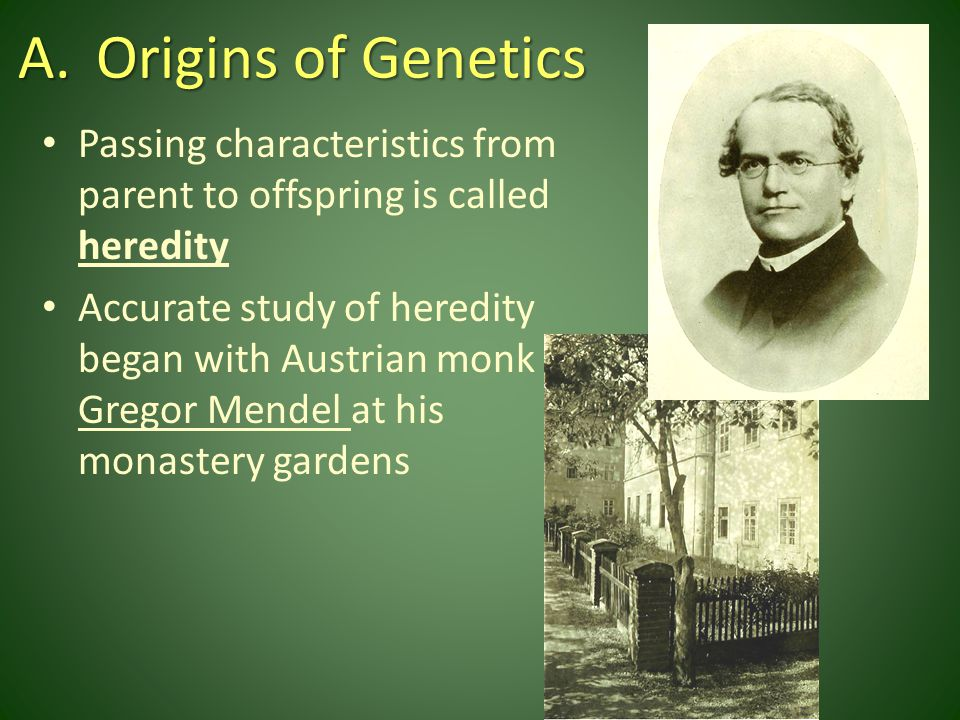 Mendel used different varieties of garden pea plant – Could predict patterns of heredity which form modern-day genetics principles – Garden peas have eight observable characteristics with two distinct traits that Mendel counted and analyzed with each cross or breeding