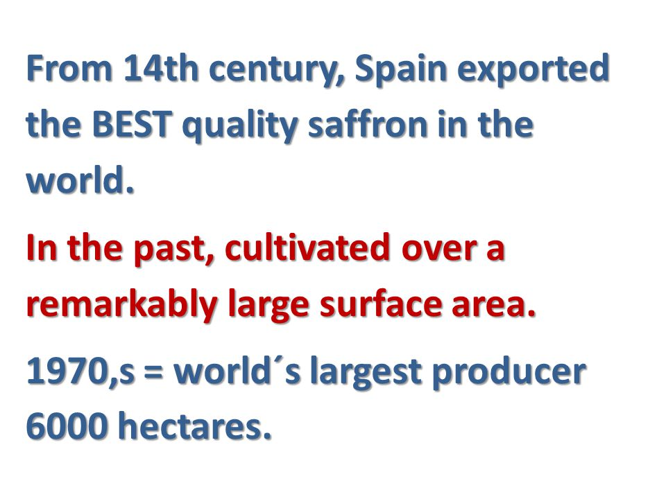 From 14th century, Spain exported the BEST quality saffron in the world.