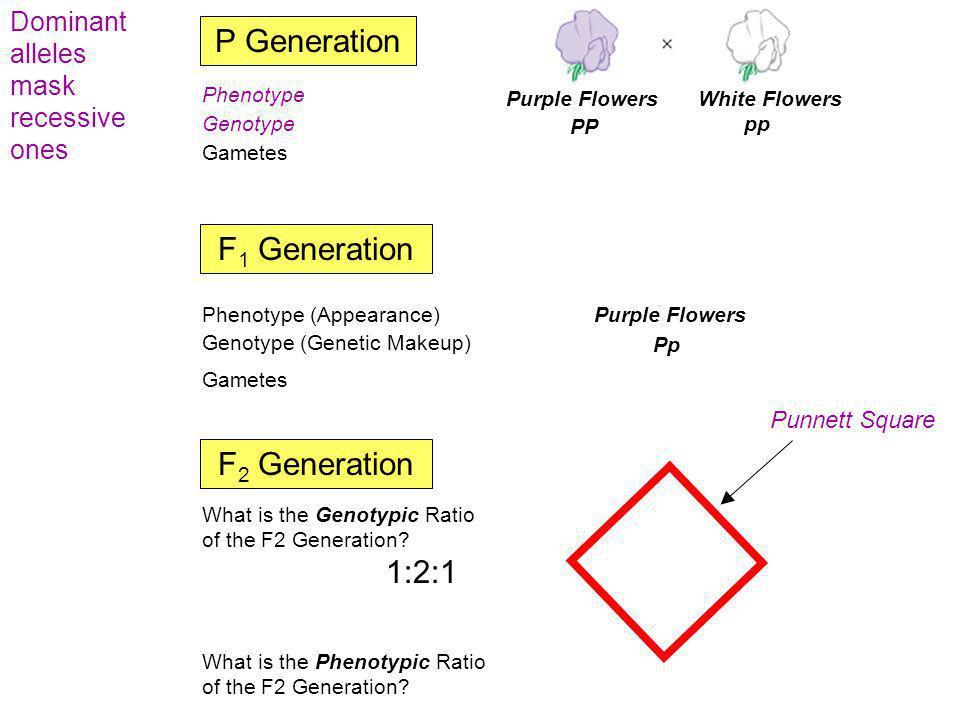 Pp PP pp P p Pp PP Pp pp PP pp P Generation F 1 Generation F 2 Generation Phenotype (Appearance) Purple FlowersWhite Flowers Genotype (Genetic Makeup)